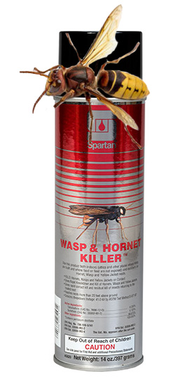 HDi Wasp Spray